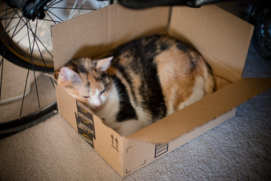 Cats Love Amazon Prime Too