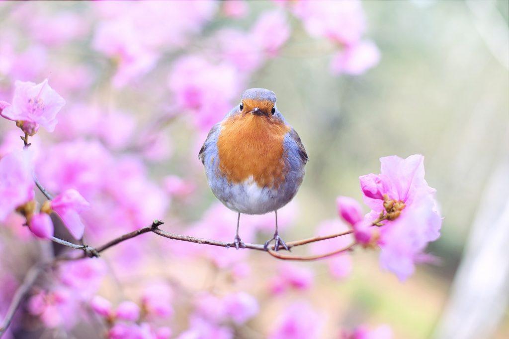 Save Money on Spring Allergies