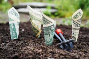 Planting and Growing Your Money