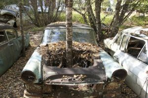 Old Junk Car In Woods